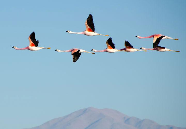 Leadership Birds flying